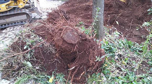 庭木の伐採・伐根